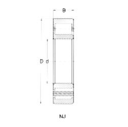 95 mm x 240 mm x 55 mm  Loyal NJ419 cylindrical roller bearings